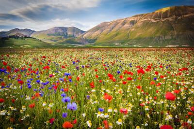champ-de-fleurs-1.jpg